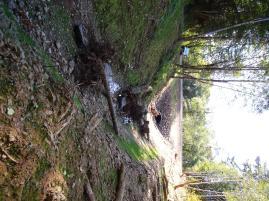 looking downstream toward pipe
