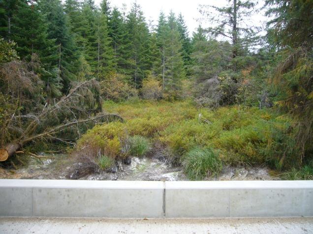 Upstream view, into wetland